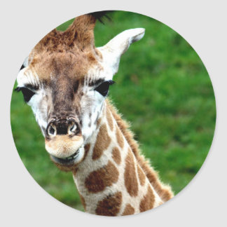 Pegatinas de la foto de la jirafa pegatina redonda