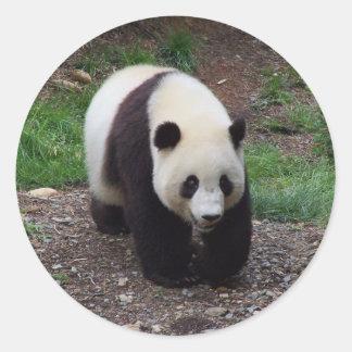 Pegatinas de la foto de la panda gigante pegatina redonda