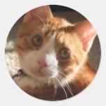 Pegatinas de la foto del gato del mac etiquetas redondas