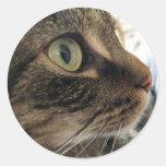 Pegatinas de la foto del gato del primer de Emma Etiquetas Redondas
