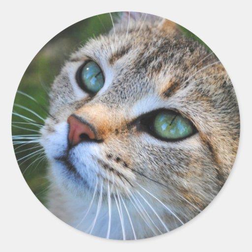Pegatinas de la fotografía del gato de Tabby Pegatina Redonda