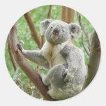 Pegatinas de la koala de Kuddly Pegatina Redonda