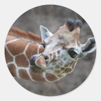 Pegatinas de la lengua de la jirafa pegatina redonda