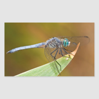 Pegatinas de la libélula pegatina rectangular