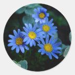 Pegatinas de la margarita azul pegatinas redondas