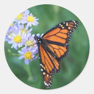 Pegatinas de la mariposa de monarca pegatinas redondas
