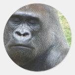 Pegatinas de la mirada del gorila