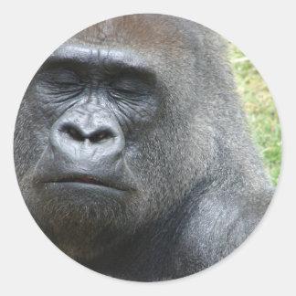 Pegatinas de la mirada del gorila pegatinas redondas