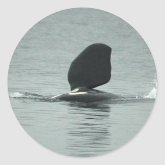 Pegatinas de la orca hola pegatina redonda