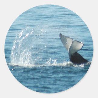 Pegatinas de la palmada de la cola de la orca pegatina redonda
