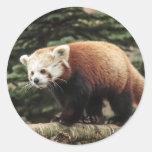 Pegatinas de la panda roja