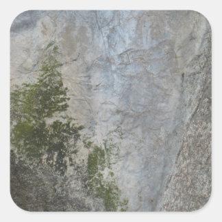 Pegatinas de la roca de las algas pegatina cuadrada