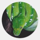 Pegatinas de la serpiente etiquetas redondas