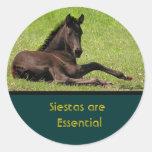Pegatinas de la siesta del caballo