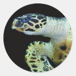 Pegatinas de la tortuga de mar del Leatherback Pegatina Redonda