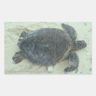 Pegatinas de la tortuga de mar verde