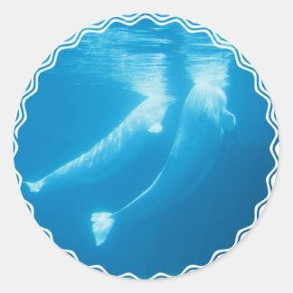 Pegatinas de las ballenas de la beluga etiquetas redondas