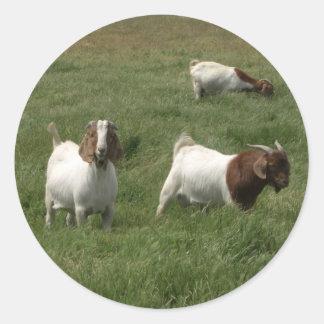 Pegatinas de las cabras pegatina redonda