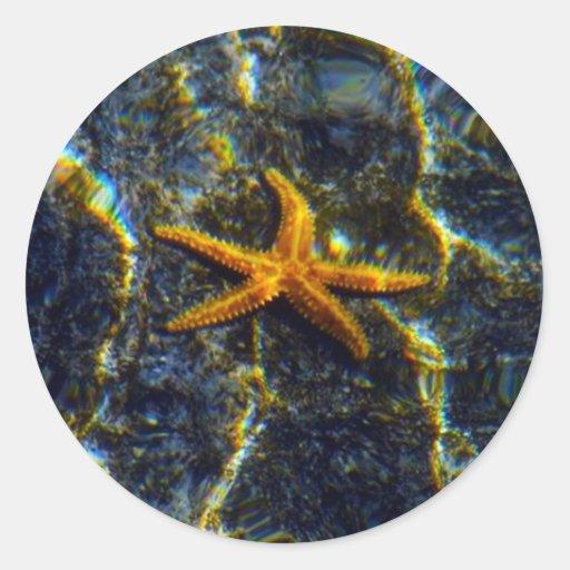Pegatinas de las estrellas de mar etiquetas redondas