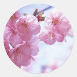 Pegatinas de las flores de cerezo #1 etiquetas redondas