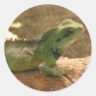 Pegatinas de las fotos de la iguana pegatina redonda