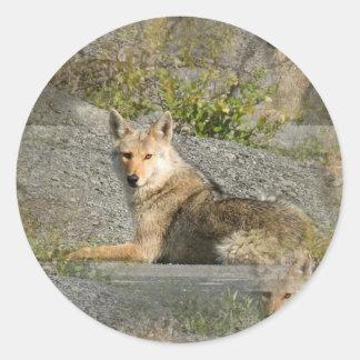 Pegatinas de las imágenes del coyote pegatina redonda