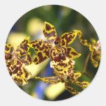 Pegatinas de las orquídeas etiquetas redondas