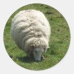 Pegatinas de las ovejas