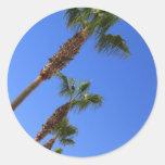 Pegatinas de las palmeras pegatinas redondas
