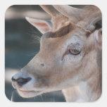 Pegatinas de los ciervos en barbecho calcomania cuadrada personalizada
