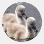 Pegatinas de los cisnes del bebé pegatina redonda