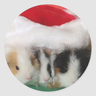 Pegatinas de los conejillos de Indias del navidad Pegatina Redonda