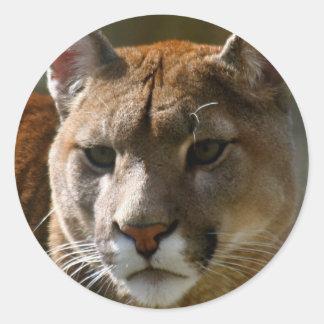 Pegatinas de los gatos del puma etiquetas redondas
