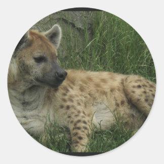 Pegatinas de los Hyenas de risa Pegatinas Redondas