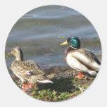 Pegatinas de los pares del pato del pato silvestre