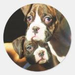 Pegatinas de los perritos del boxeador