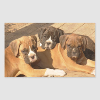 Pegatinas de los perritos del boxeador rectangular altavoz