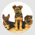 Pegatinas de los perritos del pastor alemán etiqueta redonda