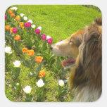 Pegatinas de los tulipanes del collie N Pegatina Cuadradas