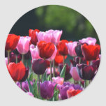 Pegatinas de los tulipanes pegatinas redondas