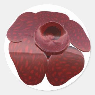 Pegatinas de Rafflesia Pegatinas Redondas