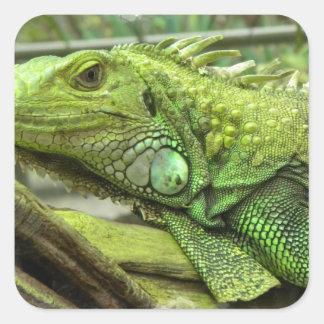 Pegatinas de reclinación del lagarto pegatinas cuadradases personalizadas