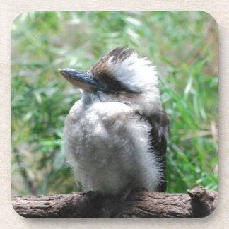Pegatinas de risa de Kookaburra Posavasos