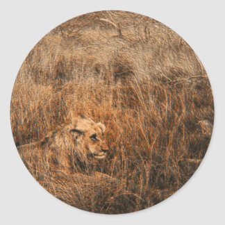 Pegatinas de sexo masculino del safari del animal pegatina redonda