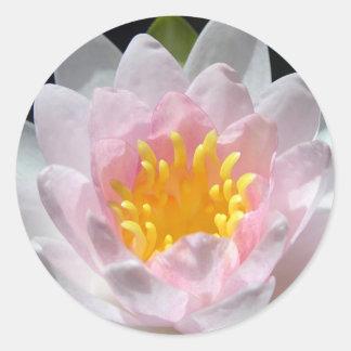 Pegatinas de Waterlily