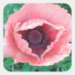 Pegatinas decorativos rosados de la amapola calcomanías cuadradases