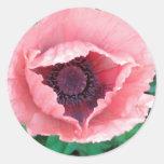 Pegatinas decorativos rosados de la amapola etiquetas redondas