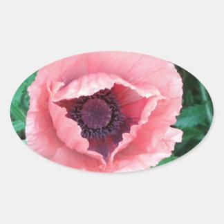 Pegatinas decorativos rosados de la amapola pegatina ovalada