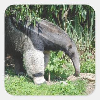 Pegatinas del Anteater gigante Pegatina Cuadrada