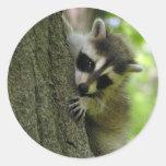 Pegatinas del bebé del mapache pegatinas redondas